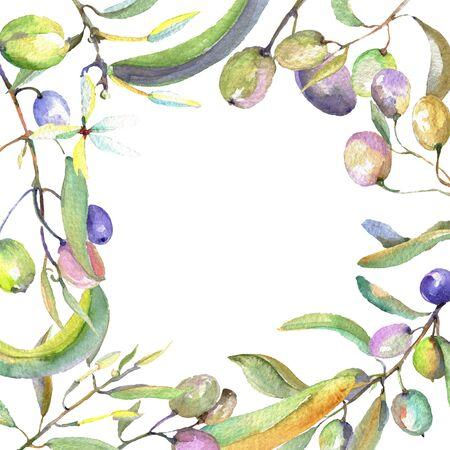 Olivenzweig mit schwarzen und grünen Früchten. Hintergrundillustrationssatz. Aquarellzeichnung Mode Aquarell isoliert. Rahmenverzierungsquadrat.