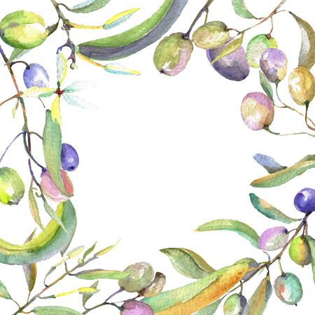 Rama de olivo con frutos negros y verdes. conjunto de ilustración de fondo. Acuarela dibujo aquarelle de moda aislado. Plaza de adorno de borde de marco.