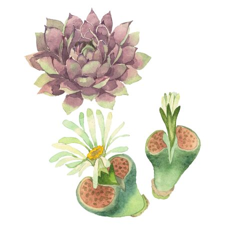 Succulent floral botanical flower. Wild spring leaf wildflower isolated.  background illustration set. Watercolour drawing fashion aquarelle isolated. Isolated cacti illustration element.