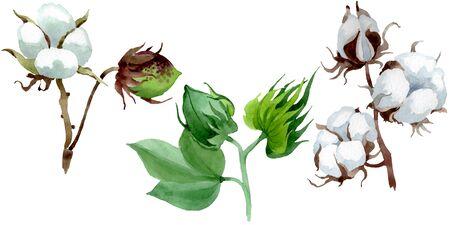 White cotton floral botanical flower. Wild spring leaf wildflower.  background illustration set. Watercolour drawing fashion aquarelle. Isolated cotton illustration element.