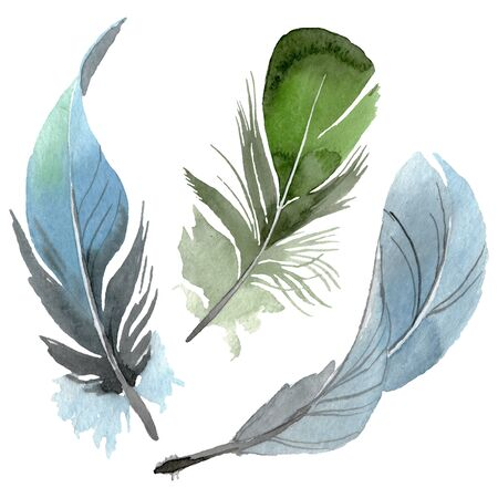 Bird feather from wing isolated.  background illustration set. Watercolour drawing fashion aquarelle isolated. Isolated feathers illustration element. Stock Photo