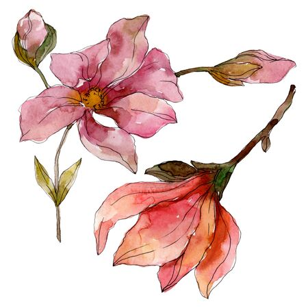 Camelia floral botanical flowers. Wild spring leaf wildflower isolated.  background illustration set. Watercolour drawing fashion aquarelle isolated. Isolated camelia illustration element.