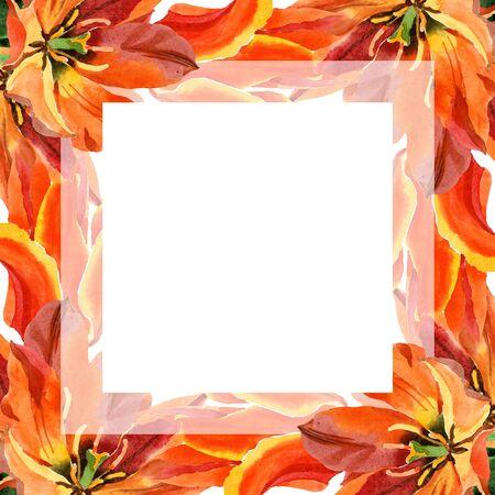 Orange tulip floral botanical flower. Wild spring leaf wildflower isolated.  background illustration set. Watercolour drawing fashion aquarelle isolated. Frame border ornament square.