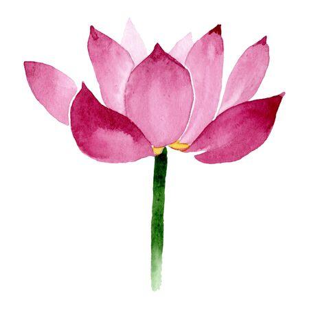 Pink lotus floral botanical flowers. Wild spring leaf wildflower.  background illustration set. Watercolour drawing fashion aquarelle. Isolated nelumbo illustration element.
