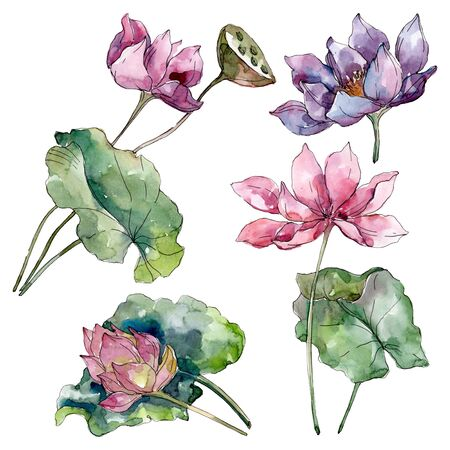 Lotus floral botanical flowers. Wild spring leaf wildflower isolated.  background illustration set. Watercolour drawing fashion aquarelle isolated. Isolated lotus illustration element. 스톡 콘텐츠