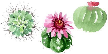 Green cactus floral botanical flowers. Wild spring leaf wildflower isolated.  background illustration set. Watercolour drawing fashion aquarelle. Isolated cacti illustration element. 스톡 콘텐츠