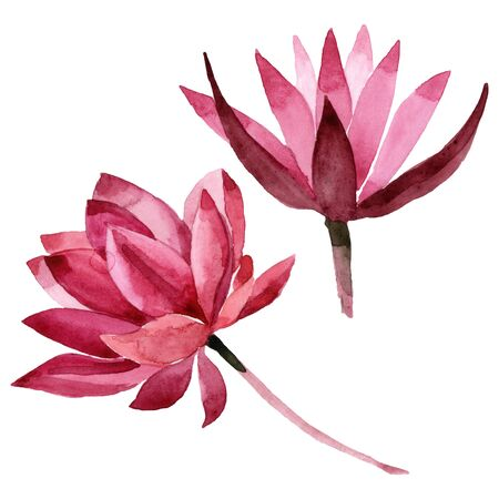 Red lotus floral botanical flower. Wild spring leaf wildflower.  background illustration set. Watercolour drawing fashion aquarelle. Isolated lotus illustration element. Stock fotó - 131389063