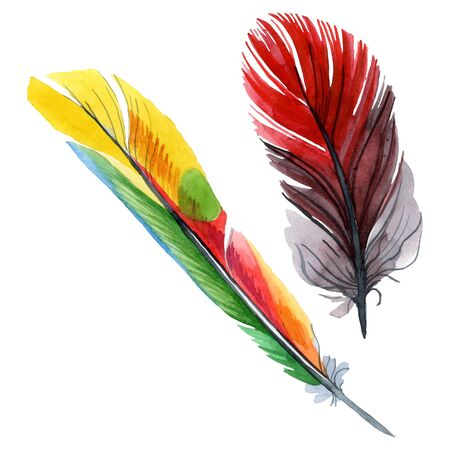 Colorful bird feather from wing isolated.  background illustration set. Watercolour drawing fashion aquarelle isolated. Isolated feather illustration element. Zdjęcie Seryjne
