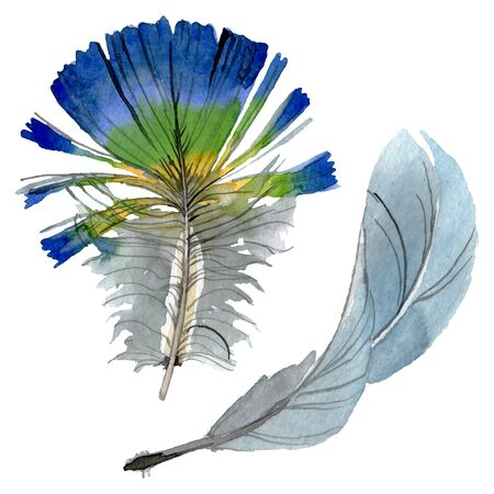 Bird feather from wing isolated.  background illustration set. Watercolour drawing fashion aquarelle isolated. Isolated feathers illustration element. Zdjęcie Seryjne