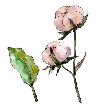 Cotton floral botanical flower. Wild spring leaf wildflower isolated.  background illustration set. Watercolour drawing fashion aquarelle isolated. Isolated cotton illustration element. 스톡 콘텐츠