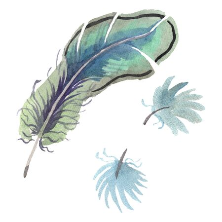 bird feather from wing isolated. Aquarelle feather for background, texture, wrapper pattern, frame or border. Isolated feather illustration element.