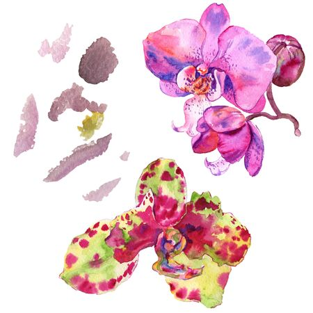 Orchid floral botanical flower. Wild spring leaf wildflower isolated.  background illustration set. Watercolour drawing fashion aquarelle isolated. Isolated orchids illustration element.