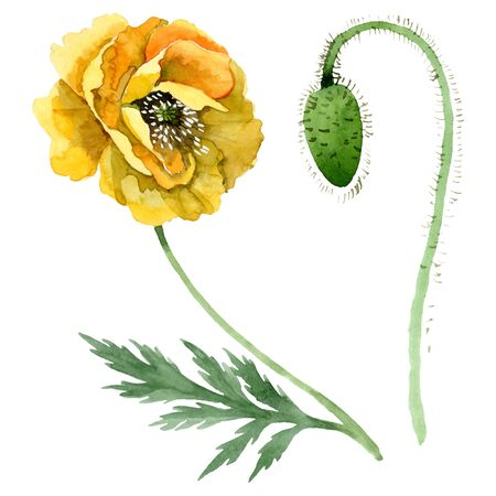 Yellow poppy floral botanical flowers. Wild spring leaf wildflower.  background illustration set. Watercolour drawing fashion aquarelle. Isolated poppies illustration element.