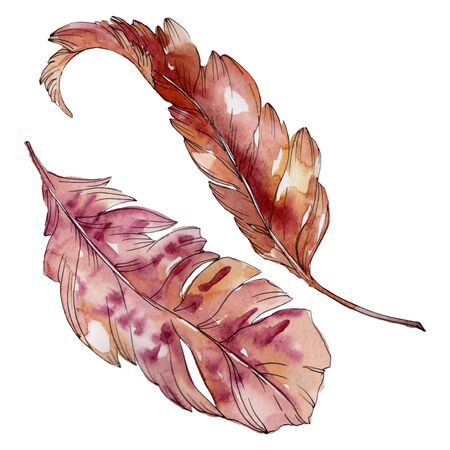 Colorful bird feather from wing isolated.  background illustration set. Watercolour drawing fashion aquarelle isolated. Isolated feathers illustration element. Stock Photo