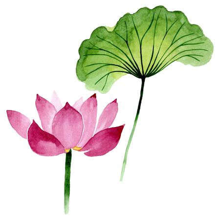 Pink lotus floral botanical flowers. Wild spring leaf wildflower.  background illustration set. Watercolour drawing fashion aquarelle. Isolated nelumbo illustration element.