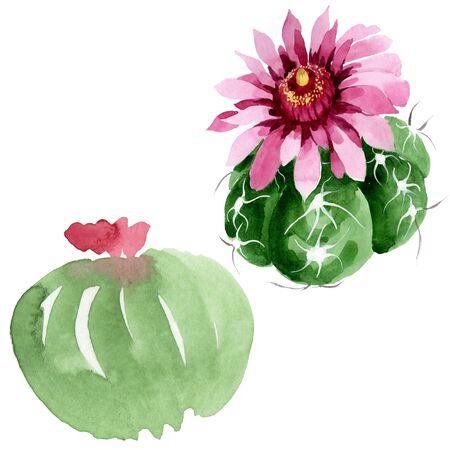Green cactus floral botanical flowers. Wild spring leaf wildflower isolated.  background illustration set. Watercolour drawing fashion aquarelle. Isolated cacti illustration element. Stock Photo
