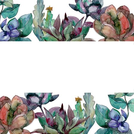 Succulents floral botanical flowers. Wild spring leaf wildflower isolated.  background illustration set. Watercolour drawing fashion aquarelle isolated. Frame border ornament square.