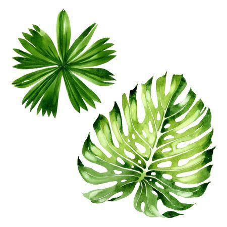 Exotic tropical hawaiian summer. Palm beach tree leaves jungle botanical.  background illustration set. Watercolour drawing fashion aquarelle isolated. Isolated leaf illustration element. Stock fotó