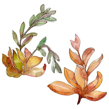 Succulents floral botanical flowers. Wild spring leaf wildflower.  background illustration set. Watercolour drawing fashion aquarelle. Isolated succulent illustration element.