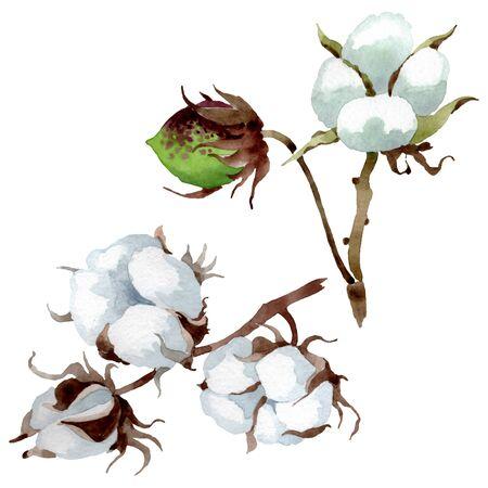 Weiße botanische Blumenblume aus Baumwolle. Wilde Frühlingsblatt-Wildblume. Hintergrundillustrationssatz. Aquarellzeichnung Mode-Aquarell. Isoliertes Baumwollillustrationselement.