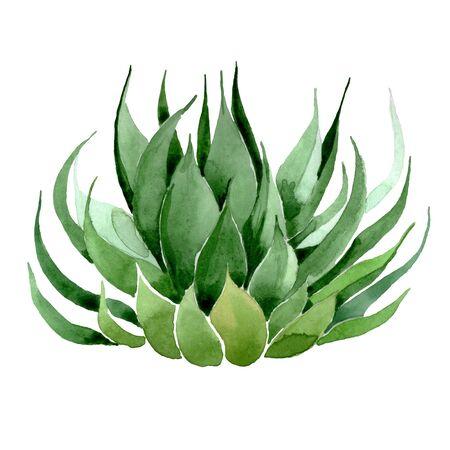 Green cactus floral botanical flower. Wild spring leaf wildflower isolated.  background illustration set. Watercolour drawing fashion aquarelle. Isolated cacti illustration element.
