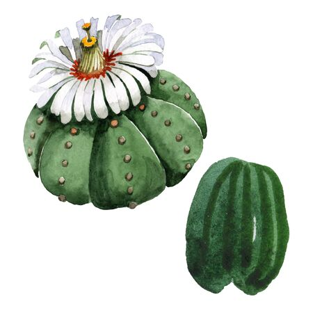 Green cactus floral botanical flower. Wild spring wildflower isolated.  background illustration set. Watercolour drawing fashion aquarelle isolated. Isolated cacti illustration element. Stock fotó