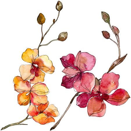 Orchid floral botanical flowers. Wild spring leaf wildflower isolated. Watercolor background illustration set. Watercolour drawing fashion aquarelle isolated. Isolated orchids illustration element. 版權商用圖片