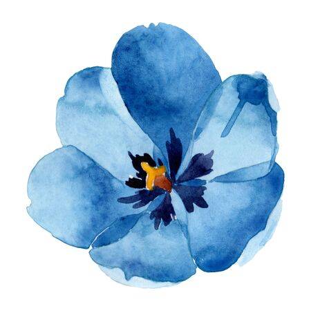 Blue tulip floral botanical flowers. Wild spring leaf wildflower isolated.  background illustration set. Watercolour drawing fashion aquarelle isolated. Isolated tulip illustration element.