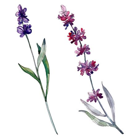 Lavender floral botanical flowers. Wild spring leaf wildflower isolated.  background illustration set. Watercolour drawing fashion aquarelle isolated. Isolated lavender illustration element.