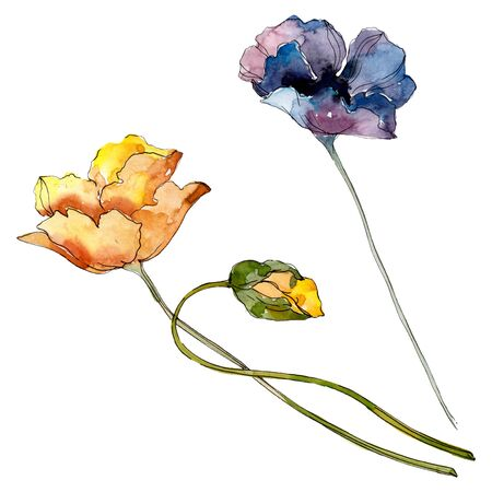 Poppy floral botanical flower. Wild spring leaf wildflower.  background illustration set. Watercolour drawing fashion aquarelle. Isolated poppies illustration element.