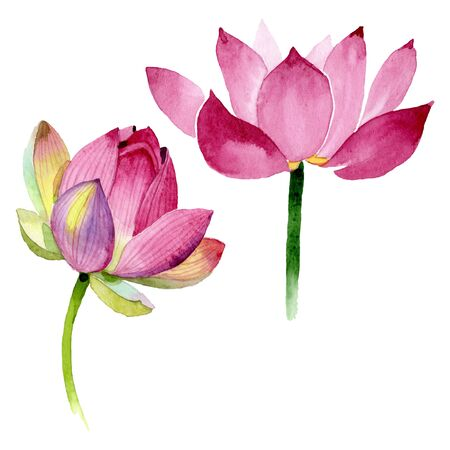 Pink lotus floral botanical flowers. Wild spring leaf wildflower. Watercolor background illustration set. Watercolour drawing fashion aquarelle. Isolated nelumbo illustration element. Stock Photo