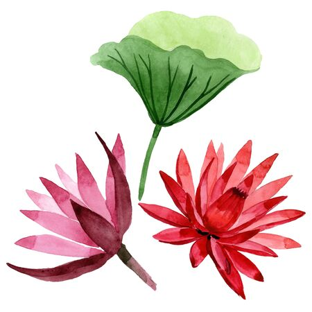 Red lotus floral botanical flower. Wild spring leaf wildflower. Watercolor background illustration set. Watercolour drawing fashion aquarelle. Isolated lotus illustration element. Stock Photo