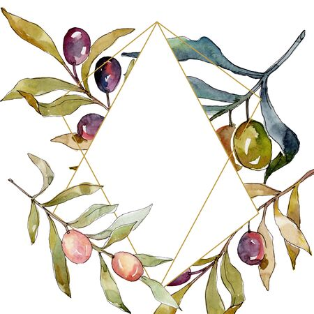 Olive branch with black and green fruit.  background illustration set. Watercolour drawing fashion aquarelle isolated. Frame border crystal ornament square.