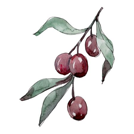 Olive branch with black and green fruit.  background illustration set. Watercolour drawing fashion aquarelle isolated. Isolated olives illustration element.