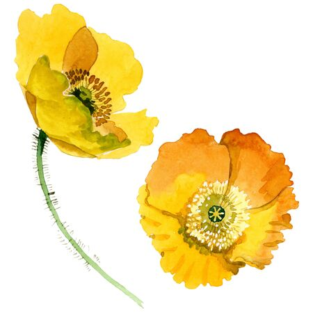 Yellow poppy floral botanical flowers. Wild spring leaf wildflower. Watercolor background illustration set. Watercolour drawing fashion aquarelle. Isolated poppies illustration element.