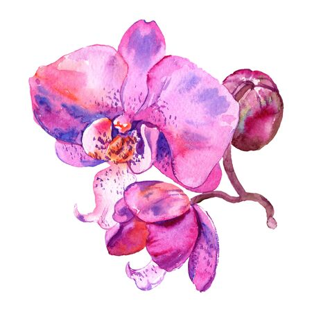 Orchid floral botanical flower. Wild spring leaf wildflower isolated.  background illustration set. Watercolour drawing fashion aquarelle isolated. Isolated orchids illustration element. Zdjęcie Seryjne - 130809914