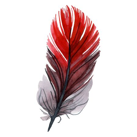 Colorful bird feather from wing isolated.  background illustration set. Watercolour drawing fashion aquarelle isolated. Isolated feather illustration element. Stock Photo