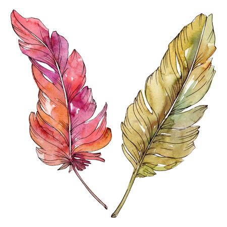 Colorful bird feather from wing isolated. Watercolor background illustration set. Watercolour drawing fashion aquarelle isolated. Isolated feather illustration element.