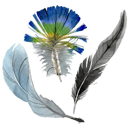 Bird feather from wing isolated.  background illustration set. Watercolour drawing fashion aquarelle isolated. Isolated feathers illustration element. Reklamní fotografie