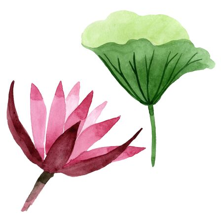 Red lotus floral botanical flower. Wild spring leaf wildflower.  background illustration set. Watercolour drawing fashion aquarelle. Isolated lotus illustration element.