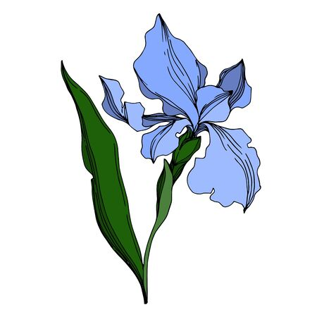 Vector Iris floral botanical flowers. Wild spring leaf wildflower isolated. Black and white engraved ink art. Isolated irises illustration element on white background. Иллюстрация
