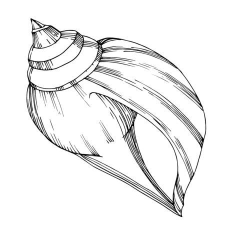 Vector Elementi tropicali della conchiglia della spiaggia di estate. Inchiostro inciso in bianco e nero art. Elemento di illustrazione di conchiglie isolato su sfondo vhite. Vettoriali