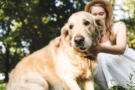 selective focus of girl in white dress and straw hat petting golden retriever while sitting on meadow with closed eyes