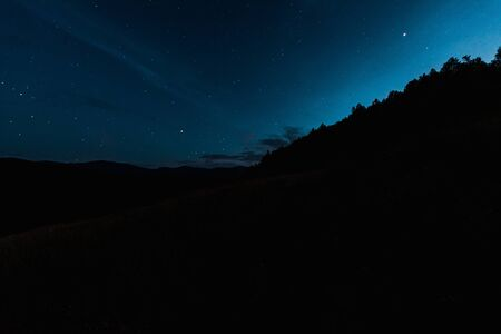 sky with shining stars near trees at night