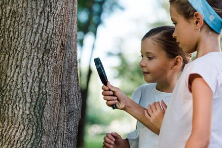 cute kids looking at three trunk through magnifier outside Фото со стока