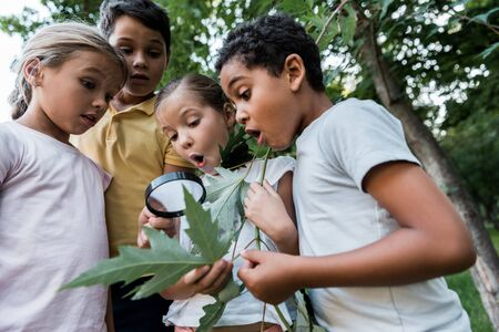 shocked multicultural children looking at green leaves though magnifier Stock Photo
