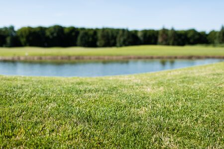 selective focus of green grass near pond in park in summer