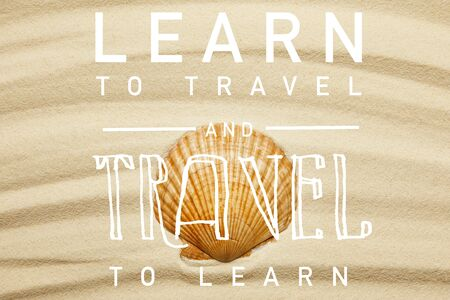 orange seashell on curve sandy beach in summertime with learn to travel and travel to learn illustration