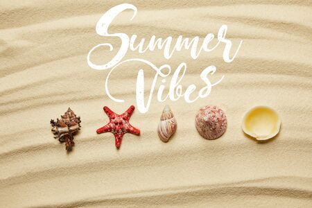flat lay of seashells and red starfish on sandy beach in summertime with summer vibes illustration Banco de Imagens