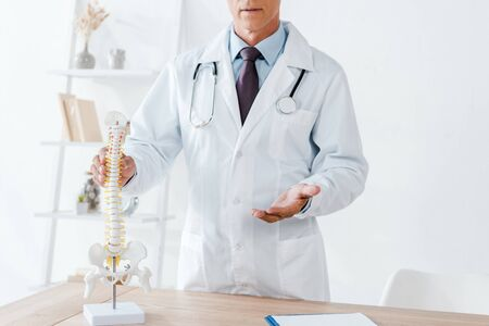 cropped view of doctor gesturing while touching spine model